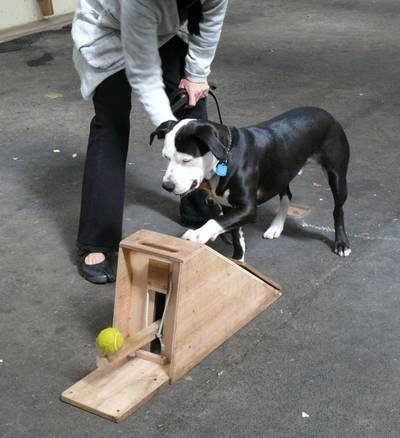 Flyball_boiteapprentissage